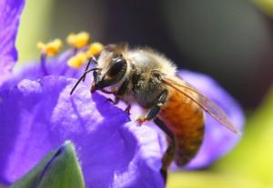 bees-food-680x470