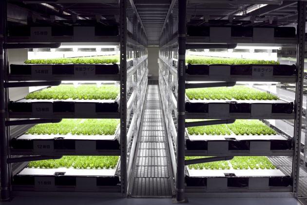 robot cultivos