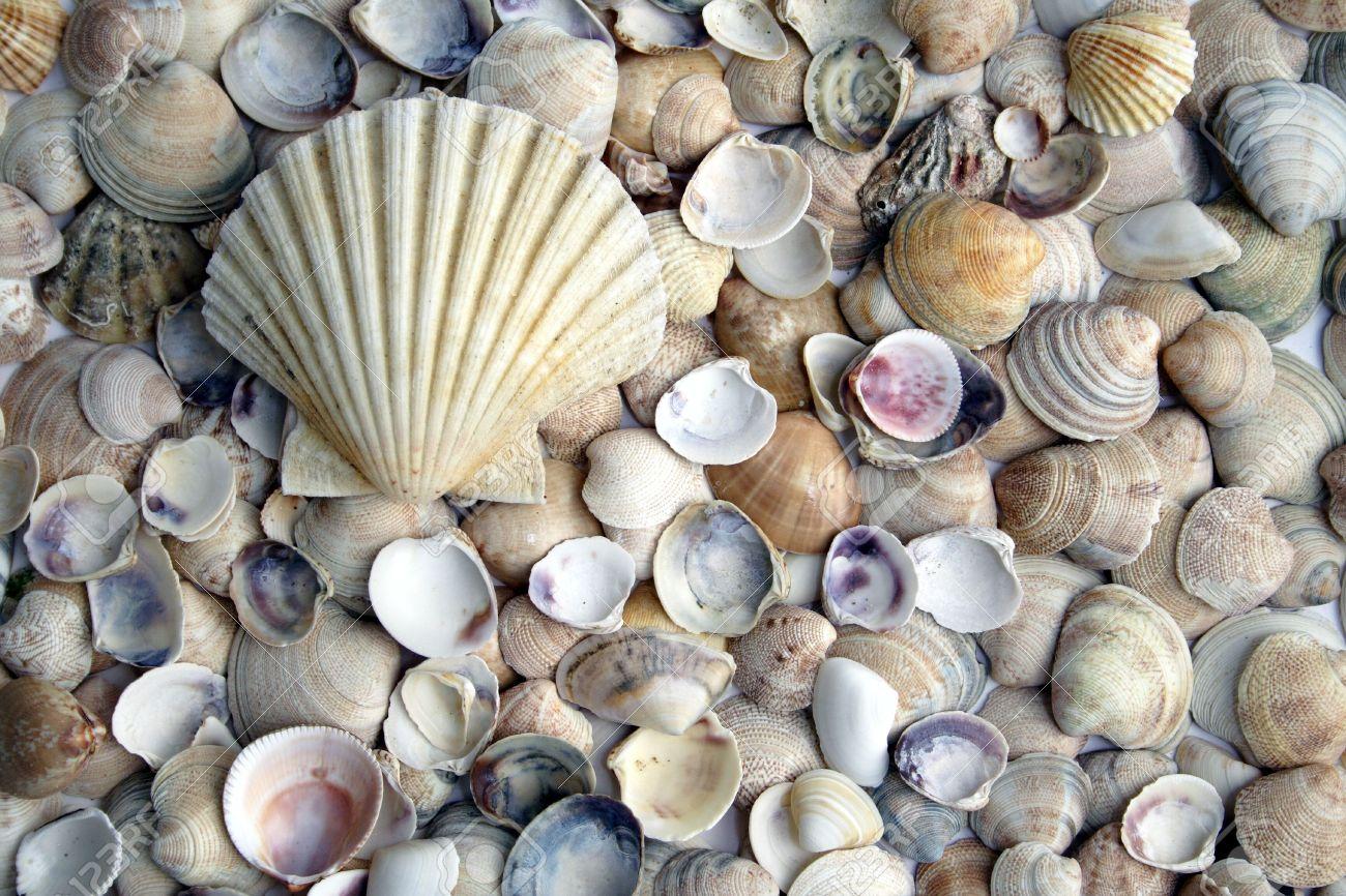 Decorar con conchas - Decoracion con conchas ...