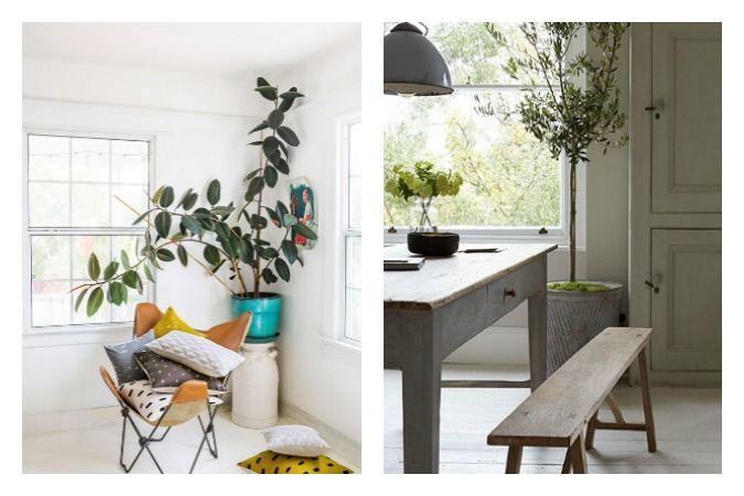 Decore su casa con plantas - Plantas interior grandes ...